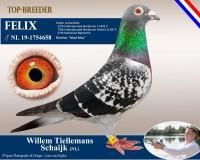 nl19-1754658-x